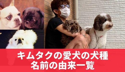 キムタクの愛犬エト&アムの犬種は?現在6匹!工藤静香やcocomi・kokiも投稿