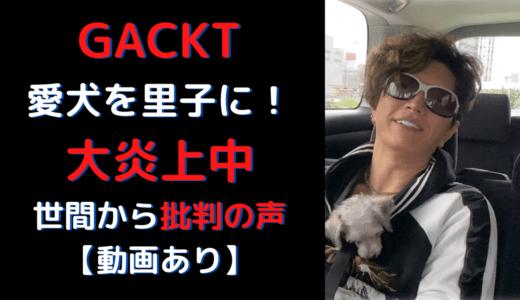 GACKTが愛犬を里子に!愛犬家から批判殺到で炎上!世間の声は?